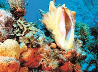 El DRNA alerta sobre el robo de corales