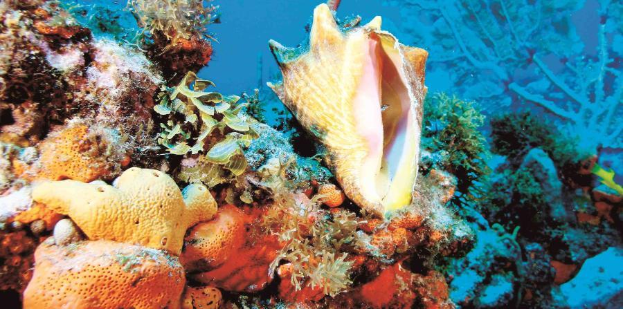 Las áreas de arrecifes en Rincón, La Parguera y Ponce son tres de las más impactadas por los robos, aunque hay incidencia en toda la Isla. (Archivo / GFR Media)