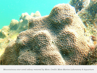 A New Hope For Corals
