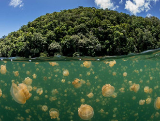 This Small Island Nation Makes a Big Case For Protecting Our Oceans