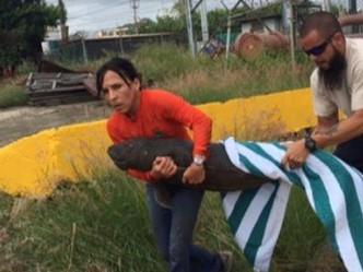 Rescatan bebé manatí en la bahía de San Juan