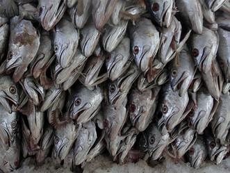 Disminuye la actividad pesquera en la Isla