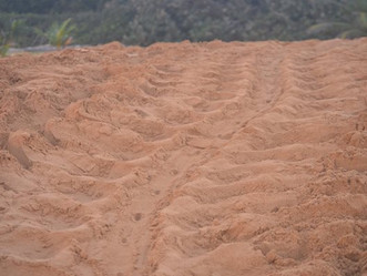 DRNA reporta el primer nido de tinglar de esta temporada de anidaje en Puerto Rico en la Reserva Nat