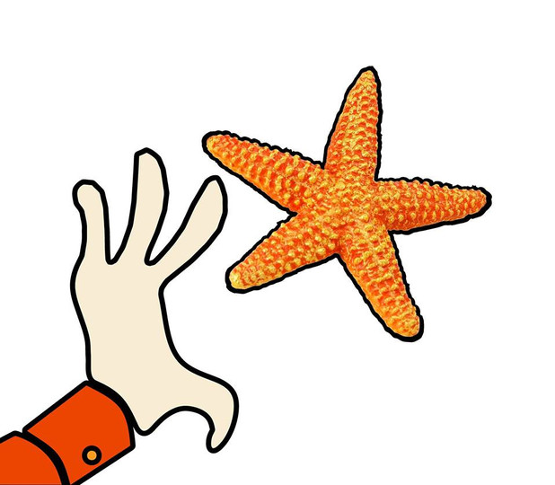 Starfish greenhouse and Gift Shop logo