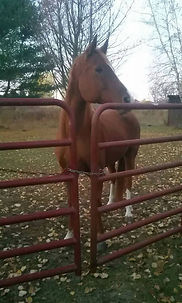 A horse looking out from behind a gate