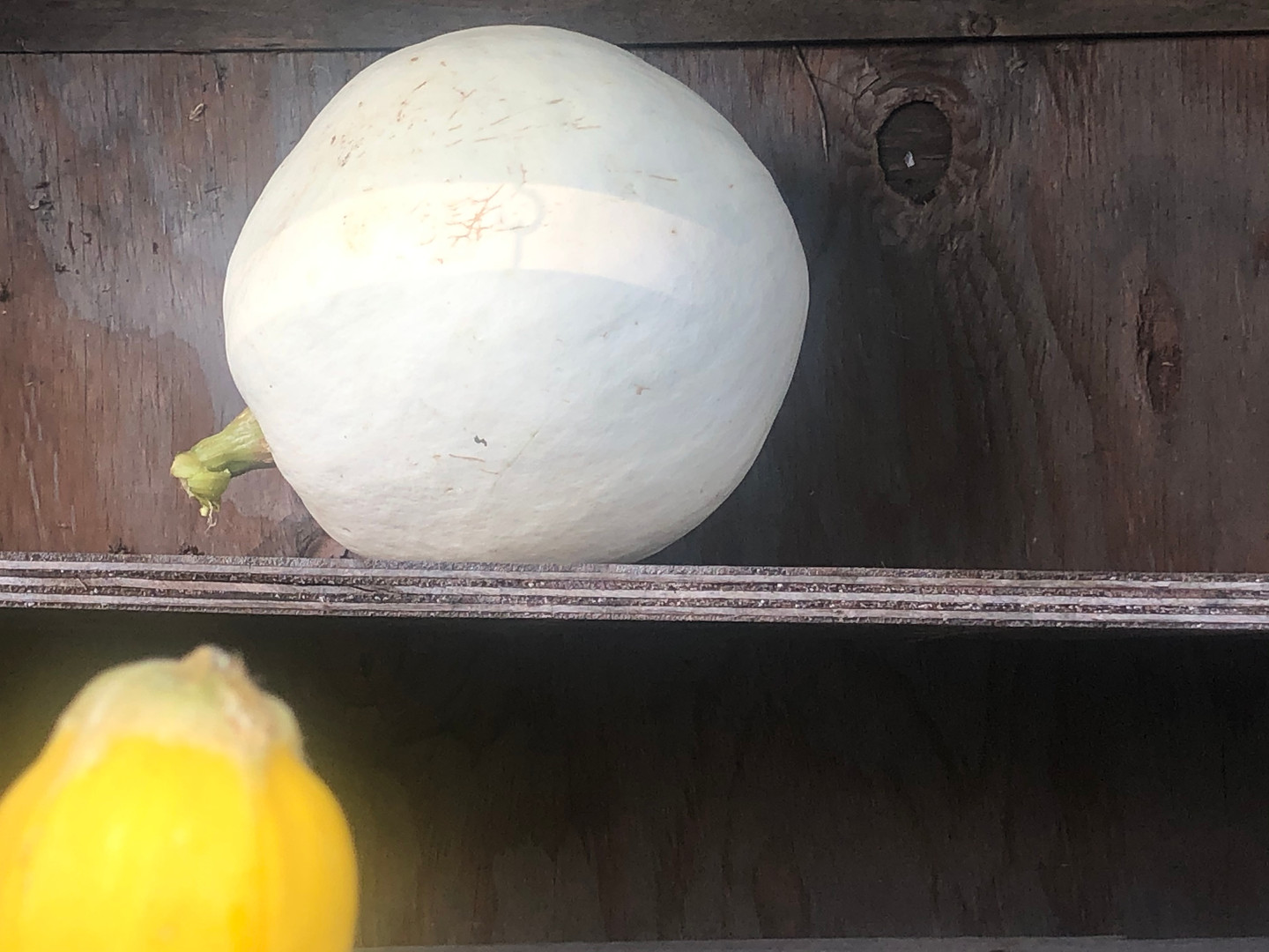 White pumpkin 2020