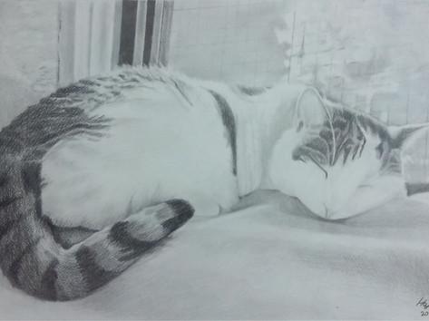 Grafit portré - Macska.jpg