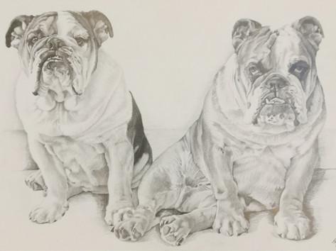 Grafit portré - Kutyák