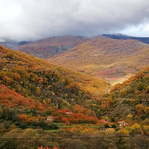 Que el otoño te envuelva en su sueño.
