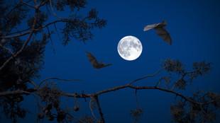 'Bat Sensitive Lighting'