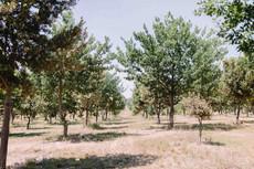 The Truffle Farm