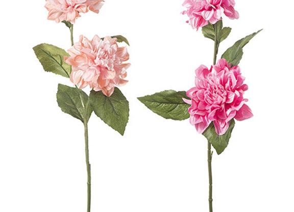 Wild Dahlia Longstem: 5 X 28.75 Inches, 2 Assorted Colors
