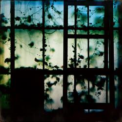 L.A. Window