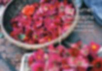 hanoiflowerspc2.jpeg