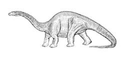 Diplodocus_Final