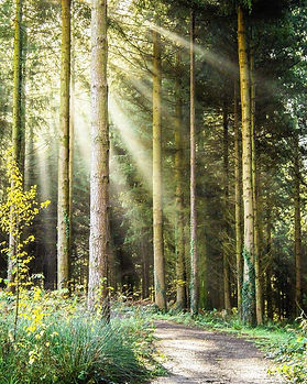 Forest Light Kristography.jpg
