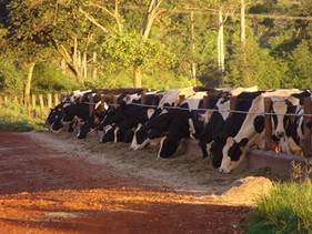 Setor pecuário pede mudanças no Programa de Subvenção ao Seguro