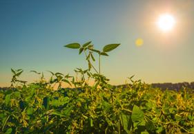 Produtores do Vale do Araguaia podem aumentar produtividade com nutrição complementar