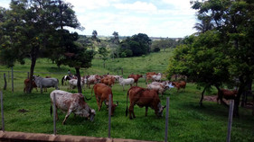 Produtor de gado investe em tecnologia e reduz custos