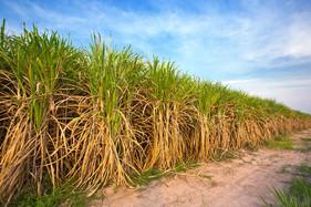 Linha foliar de fertilizantes para grãos e Cana-de-açúcar é destaque da Ubyfol na Showtec