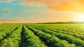 GAtec e ALFA lançam ferramenta única de gestão agroindustrial