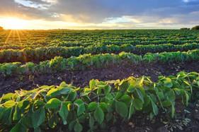 Solução garante o máximo aproveitamento de nutrientes e defensivos nas pulverizações agrícolas