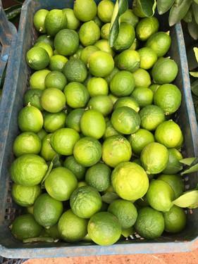 Fertilizante foliar potencializa indução de florada e aumenta produção do limão