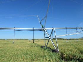 Irrigação nas lavouras de arroz garante economia de recursos e maior eficiência