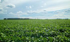 Molibdênio é fundamental para a planta aumentar o seu potencial produtivo