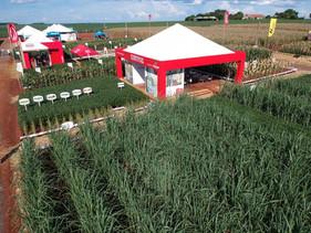Potamol é destaque da Ubyfol para setor canavieiro