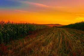 Nova lei do agro facilita acesso do setor aos investimentos do exterior