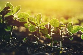 Biotrop apresenta soluções biológicas para agricultores em Campinas/SP
