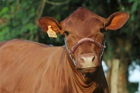 Seguro de animais diminui os riscos de perdas nas propriedades garantindo com custo acessível, maior
