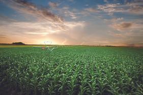 Dia mundial da água celebra uso cada vez mais sustentável na agricultura