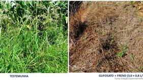 Novo herbicida contra capim amargoso chega ao mercado