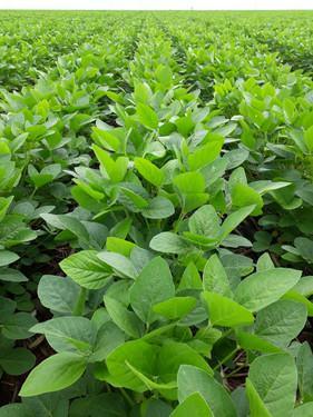 Novo produto aumenta em até 700% a cobertura da calda sobre a superfície foliar