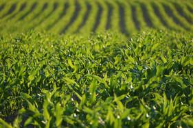 Agronegócio brasileiro deve assumir a liderança internacional da questão ambiental