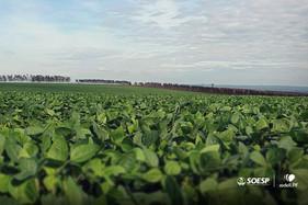 Múltiplos sistemas de integração ajudam o produtor a melhorar sua renda