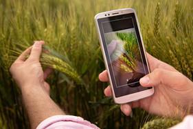 Chega ao Brasil aplicativo Inteligente para coleta e análise de dados da lavoura
