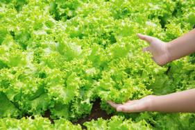 Controle biológico em frutas, legumes e verduras é eficaz e não deixa resíduos