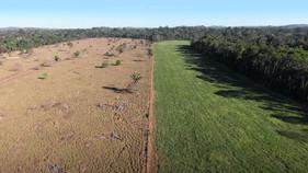 Qualidade da pastagem ajuda a melhorar a produtividade do rebanho