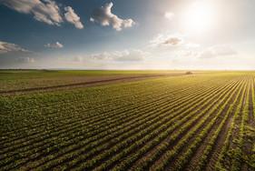 Ubyfol destaca fertilizantes foliares para soja no Maranhão