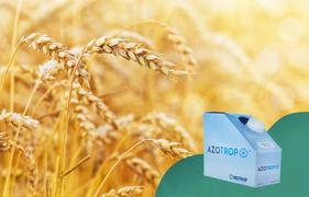 Inoculante proporciona mais eficiência no cultivo de trigo