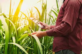 GAtec lança ferramenta Inteligente para manejo sustentável de pragas
