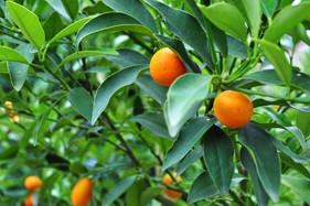 Manejo nutricional e antiestresse em frutas e hortaliças ajudam a reduzir perdas