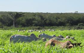 Fazenda aumenta produtividade na pecuária com auxílio da irrigação