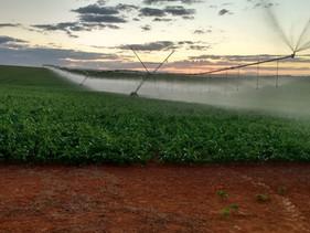 Central de atendimento especializada auxilia produtor no manejo da irrigação