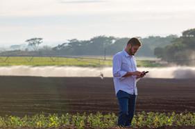 Irrigação possibilita o cultivo de batata doce e ajuda agricultor a diversificar seus negócios