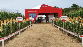 Adjuvante, enraizador e solução em recobrimento são as apostas da Ubyfol no Show Rural Coopavel