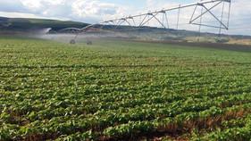 Pivôs possibilitam estabilidade econômica ao produtor